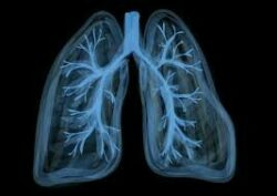 Japanese Acupuncture News - Acupuncture improves exercise tolerance and lung function in COPD (Chronic Obstructive Pulmonary Disease)